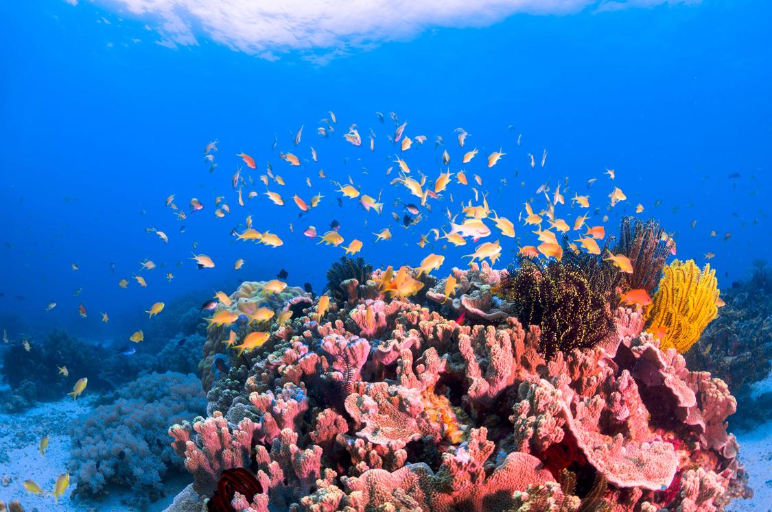 サンゴに群がる色とりどりの魚